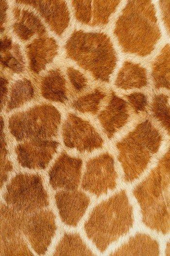 Наклейка на планшет Жираф Мех