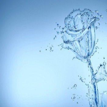 Наклейка на плеер Цветок Из Воды