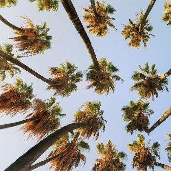 Наклейка на мод Пальмы