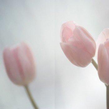 Наклейка на мод Тюльпаны