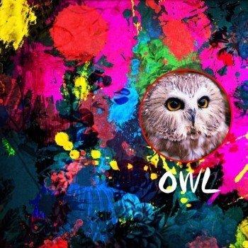 Наклейка на телефон OWL IN CIRCLE / СОВА В КРУГУ