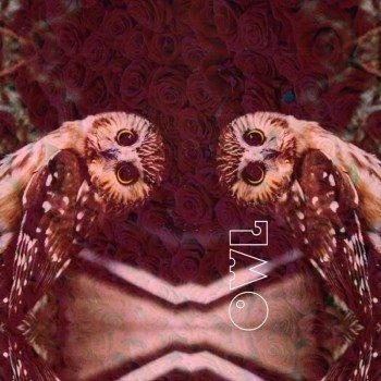 Наклейка на телефон OWL [ ROSES ]