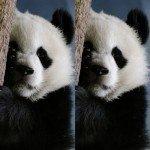Наклейка на плеер Панда