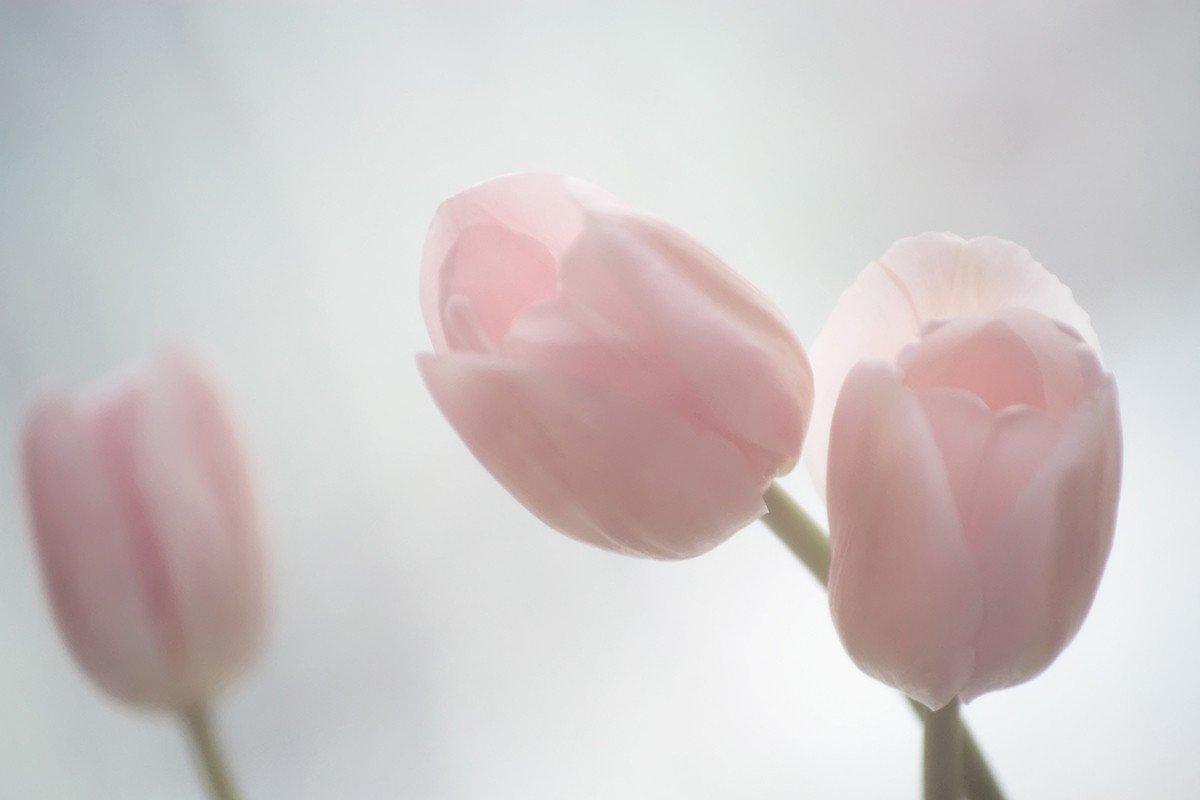 Наклейка на ноутбук Тюльпаны