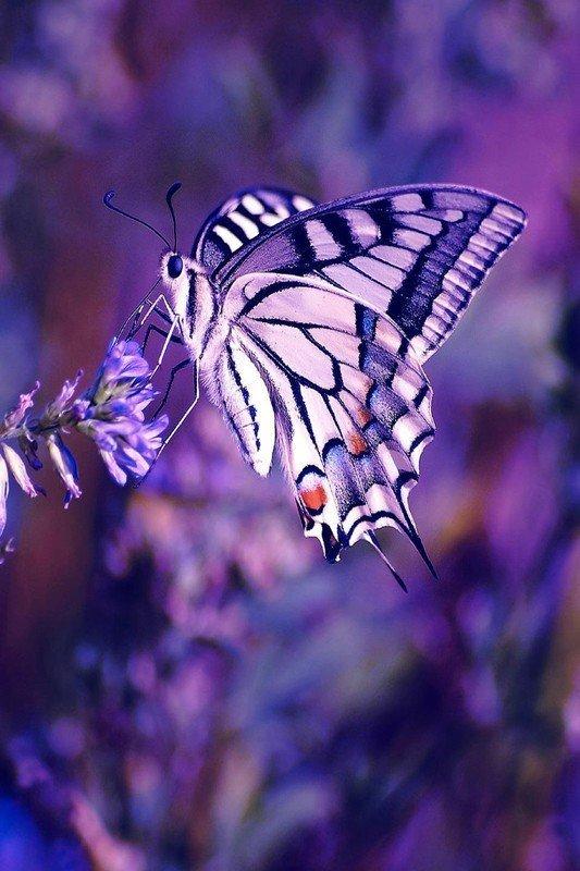 Наклейка на планшет Бабочка