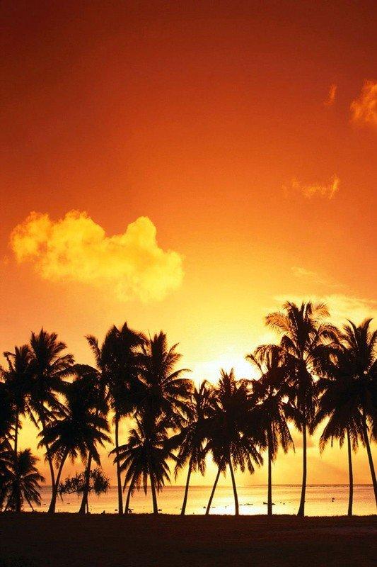 Наклейка на планшет Пальмы На Закате
