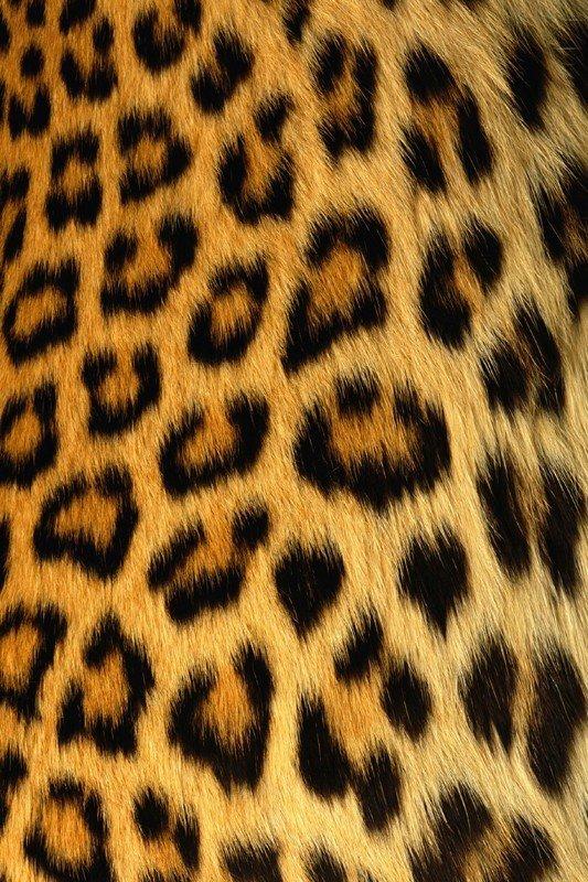 Наклейка на планшет Шкура Леопарда